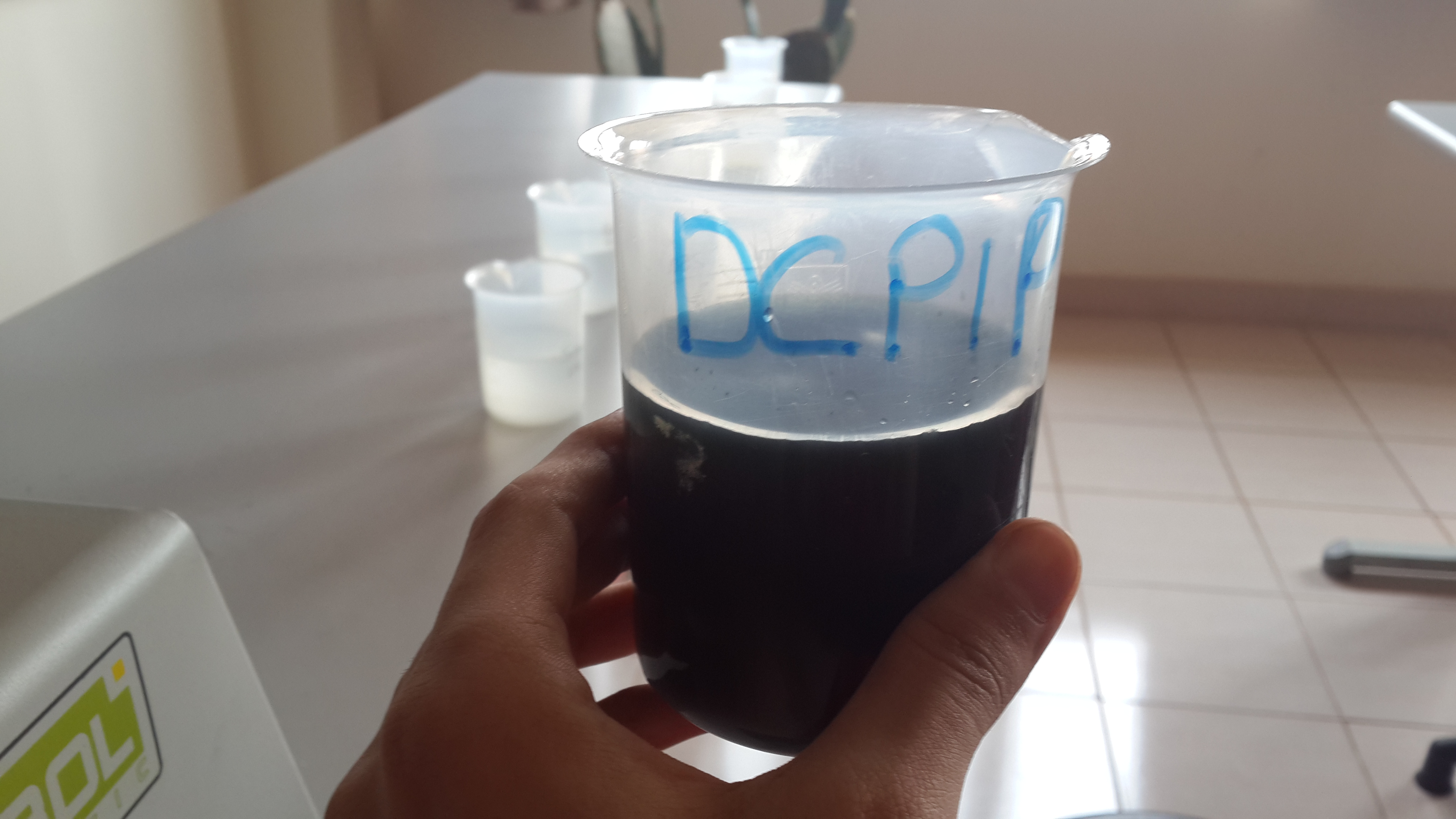 dcpip Lab 6 – fermentation & cellular respiration introduction the cells of all living organisms require energy to keep themselves alive and fulfilling their roles where does this energy come from  dcpip is a good indicator of respiration as illustrated below.