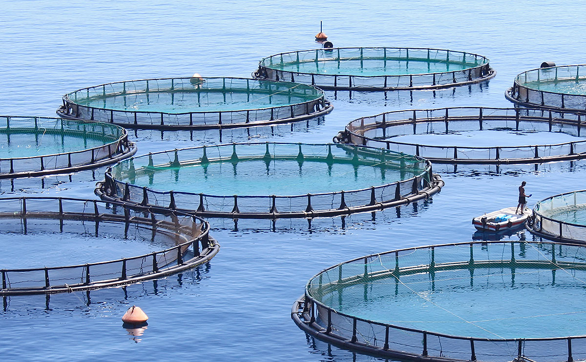 File fish farm wikimedia commons for Wisconsin fish farms