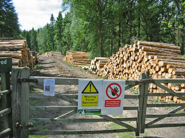 File:Forest operations and the product Newlands inclosure New Forest - geograph.org.uk - 178248.jpg