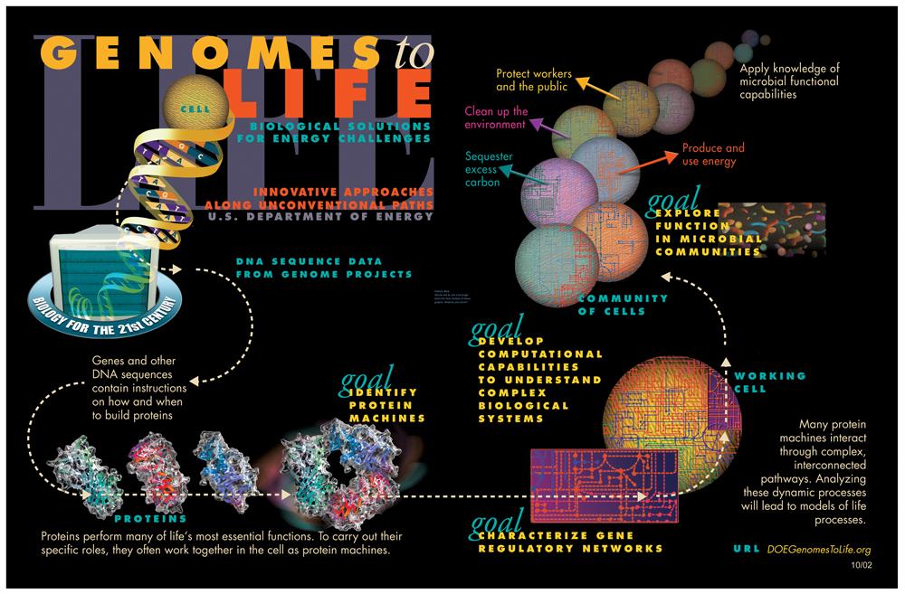 Systems biology - Wikipedia