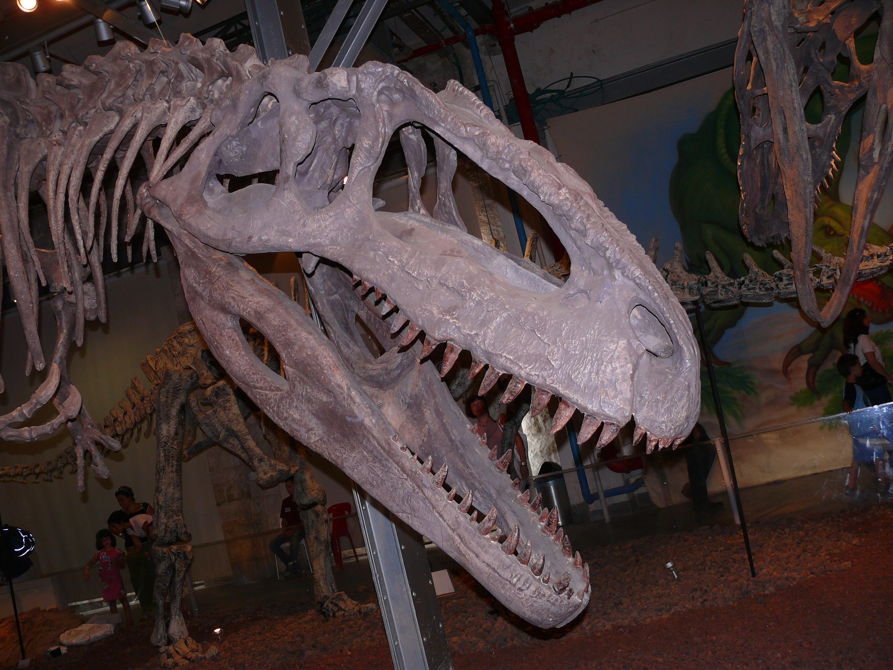 giganotosaurus haifa-aug2008.jpg