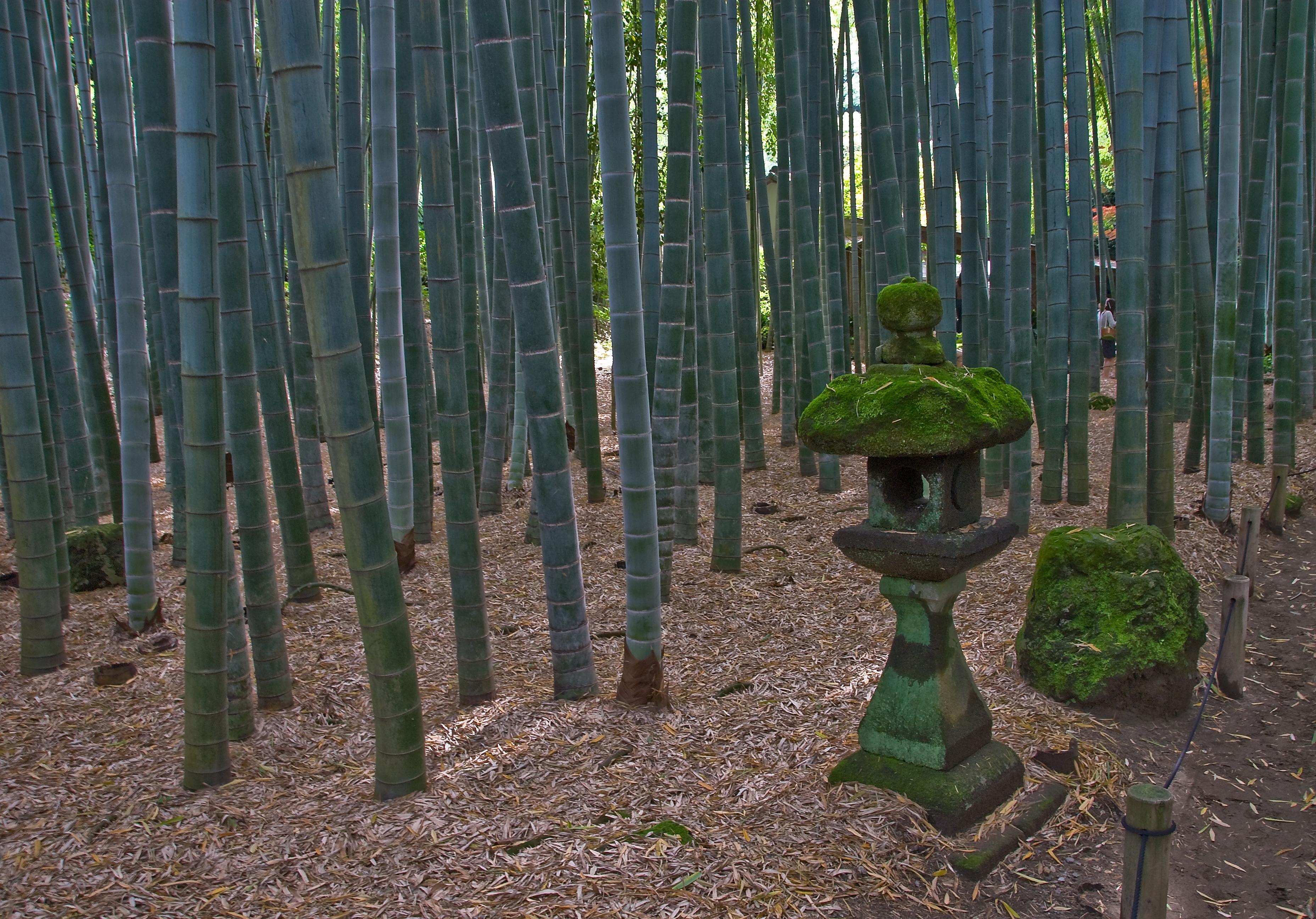 FileHokokuji Bamboo Forest Kamakurajpg Wikipedia