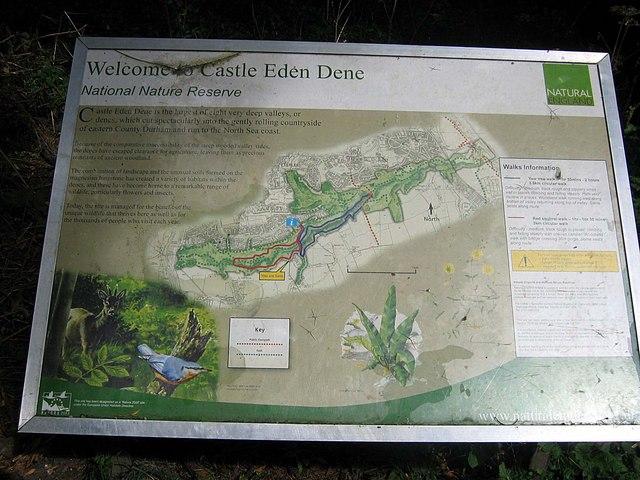 Information board at entrance to Castle Eden Dene - geograph.org.uk - 1473198