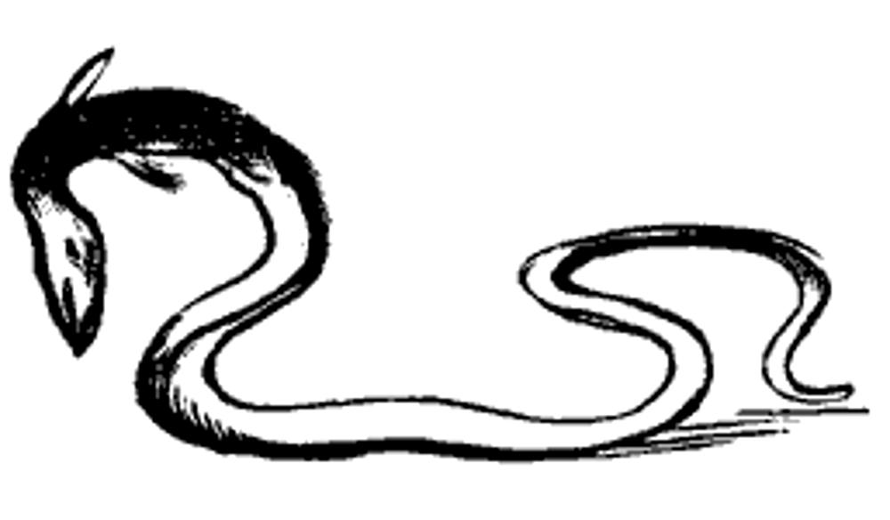 Lear 2 - Eel.jpg