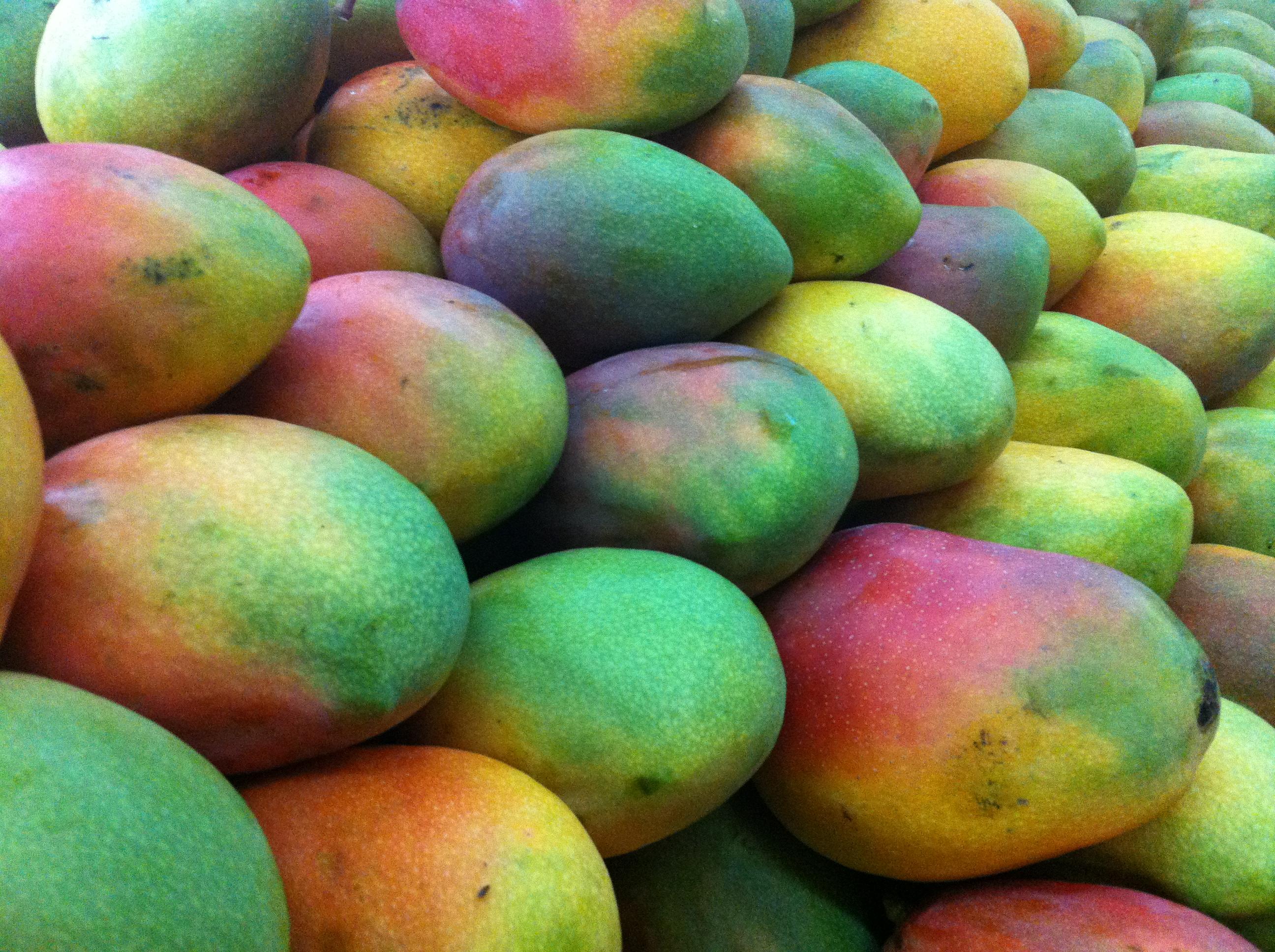 Farbverläufe bei Mangofrüchten in einem Supermarkt in Florencia, Kolumbien