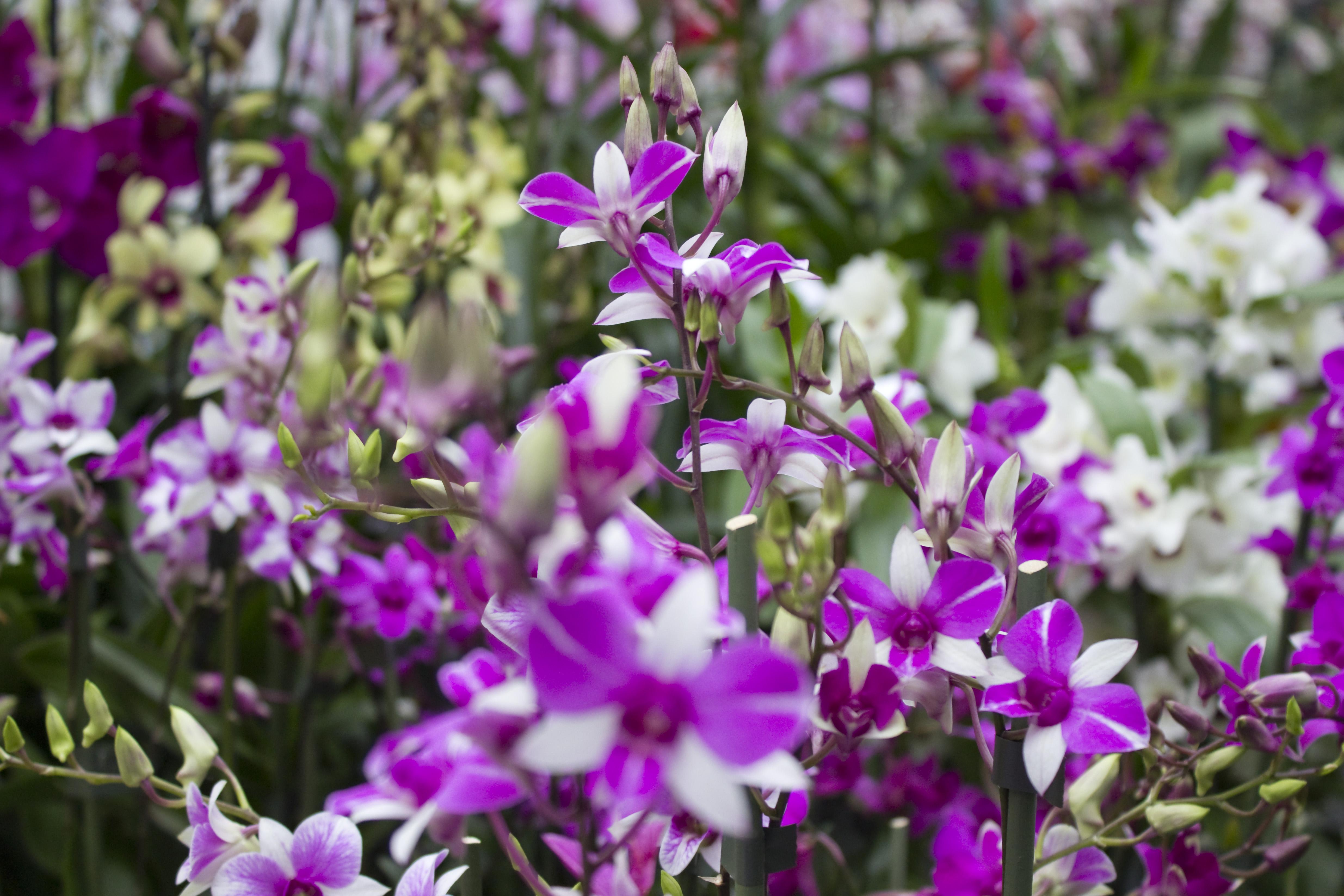 orchideje prodej online dating