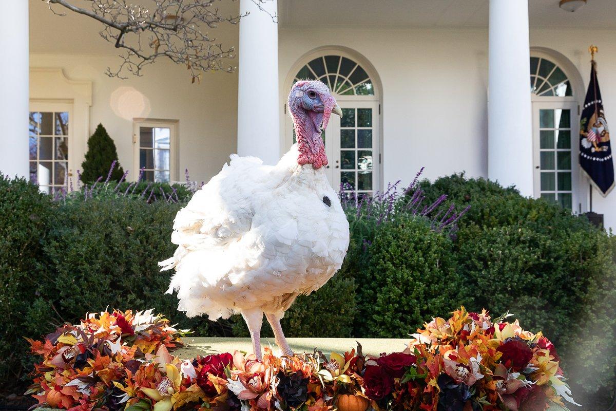 National Thanksgiving Turkey Presentation - Wikipedia