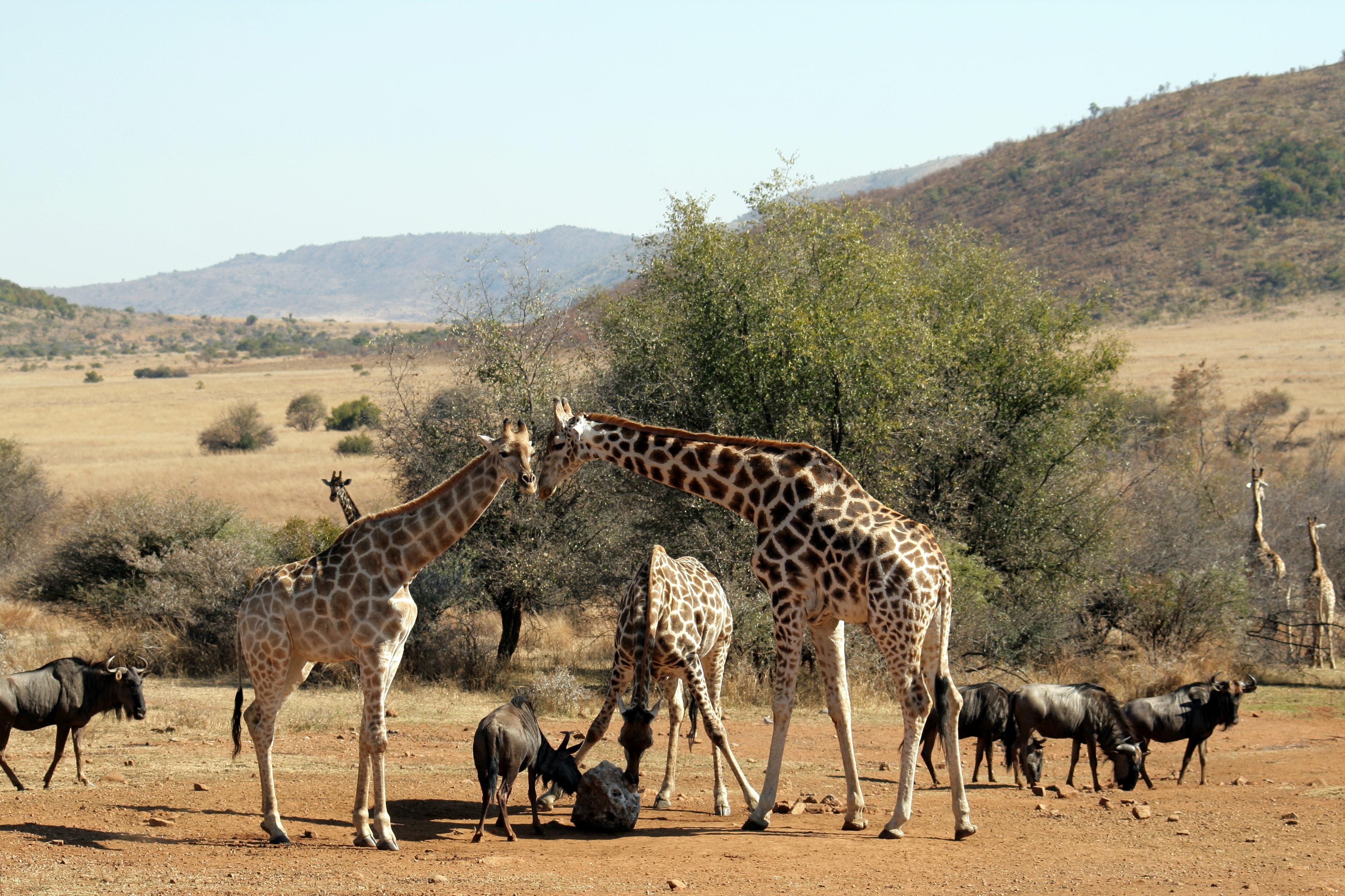 Pilanesberg South Africa 20
