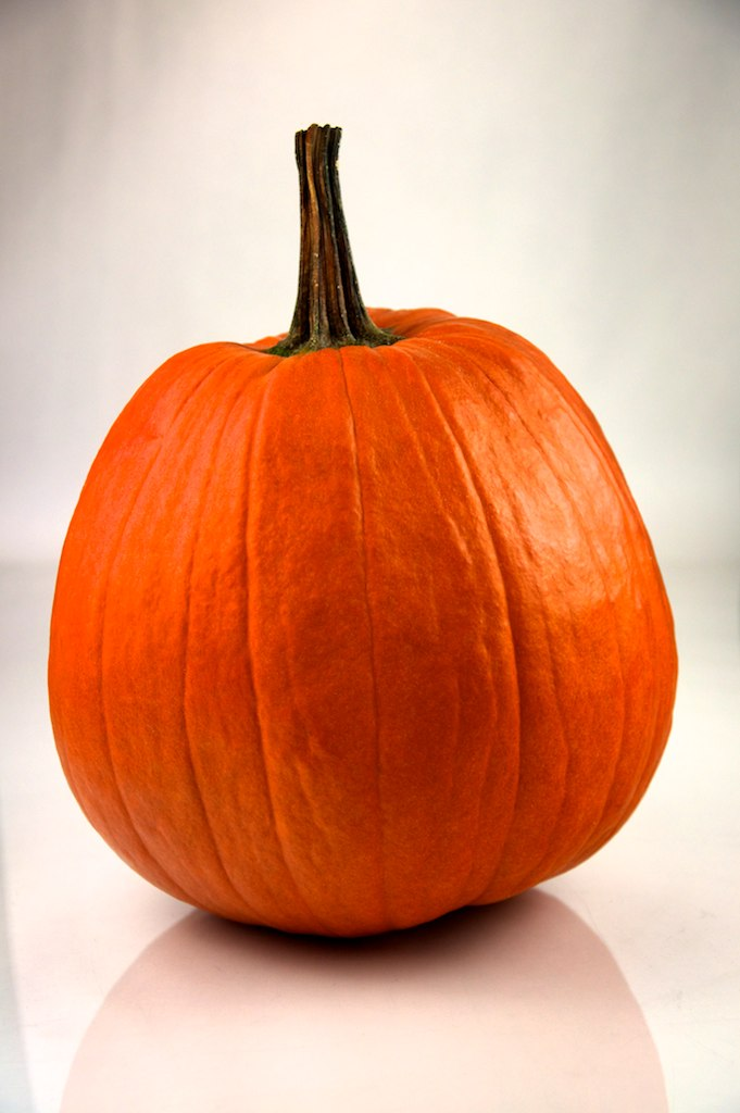 Pumpkin_252_-_Evan_Swigart.jpg