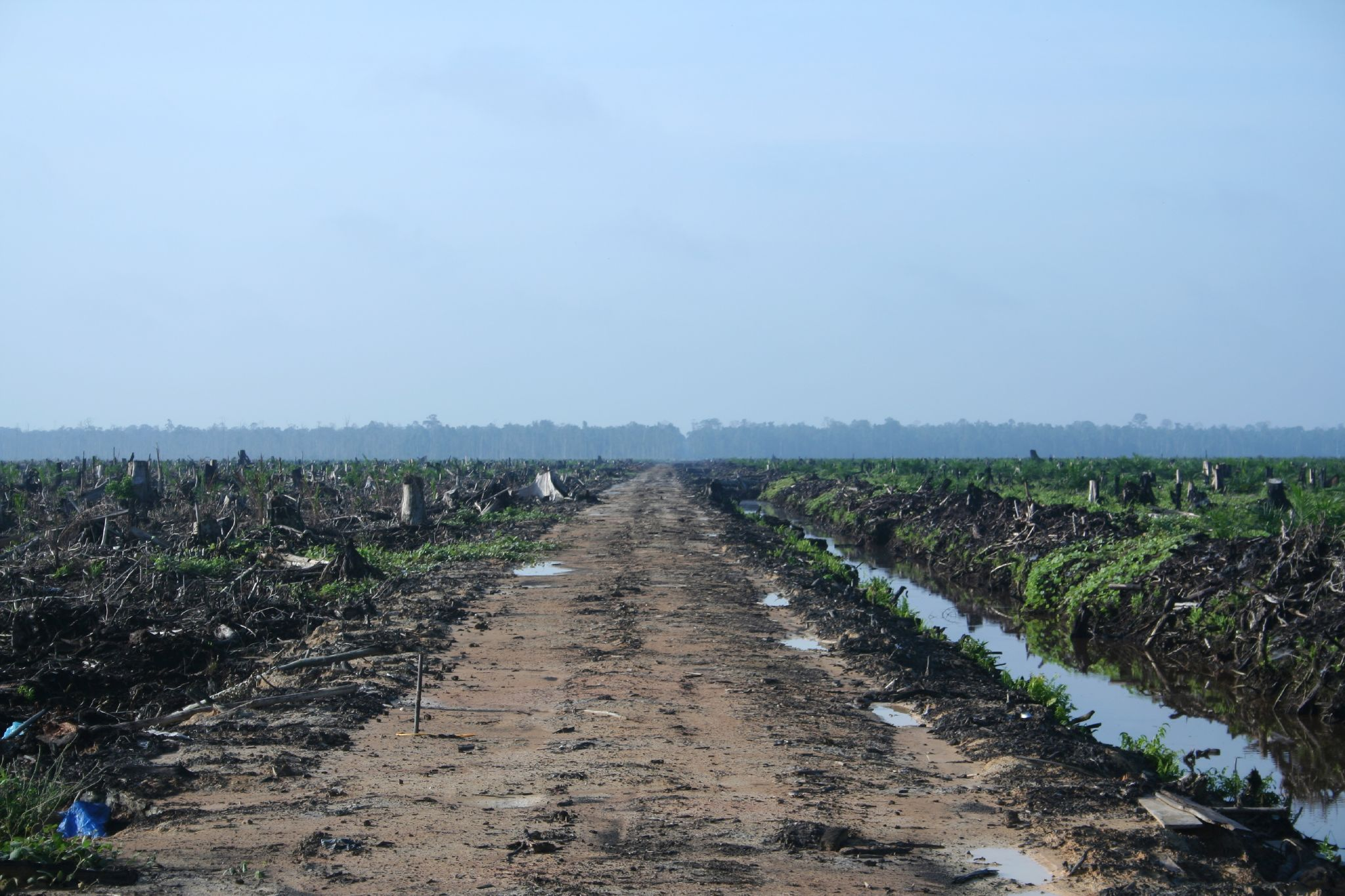 Riau palm oil 2007.jpg
