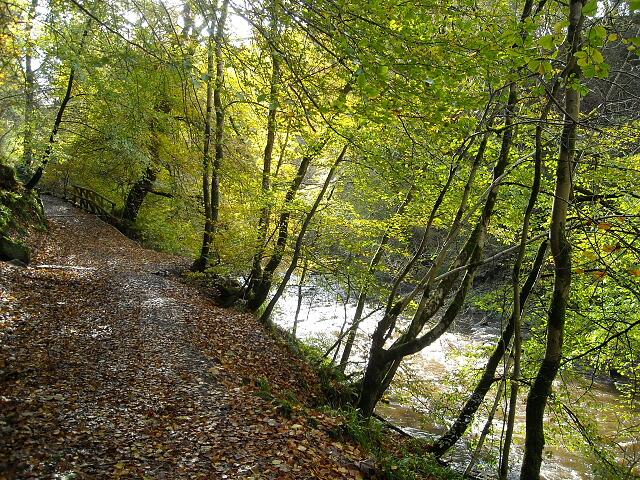 Riverside Path in Calderglen Country Park - geograph.org.uk - 1022164