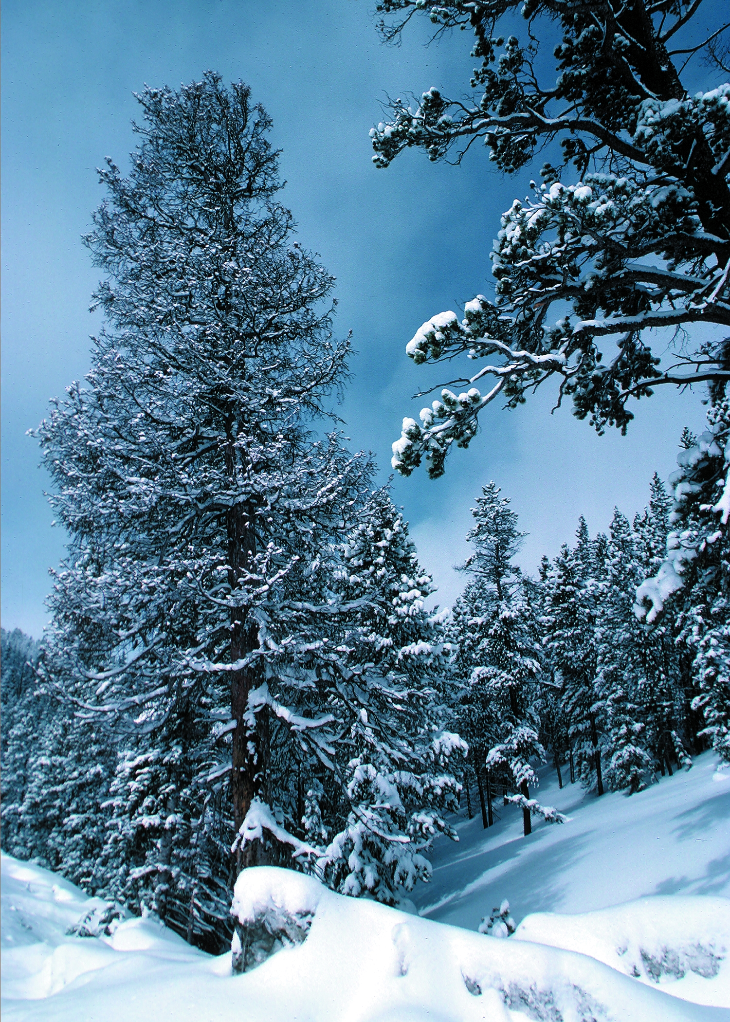 http://upload.wikimedia.org/wikipedia/commons/0/01/Snow_in_Colarado_in_the_United_States_of_America.jpeg
