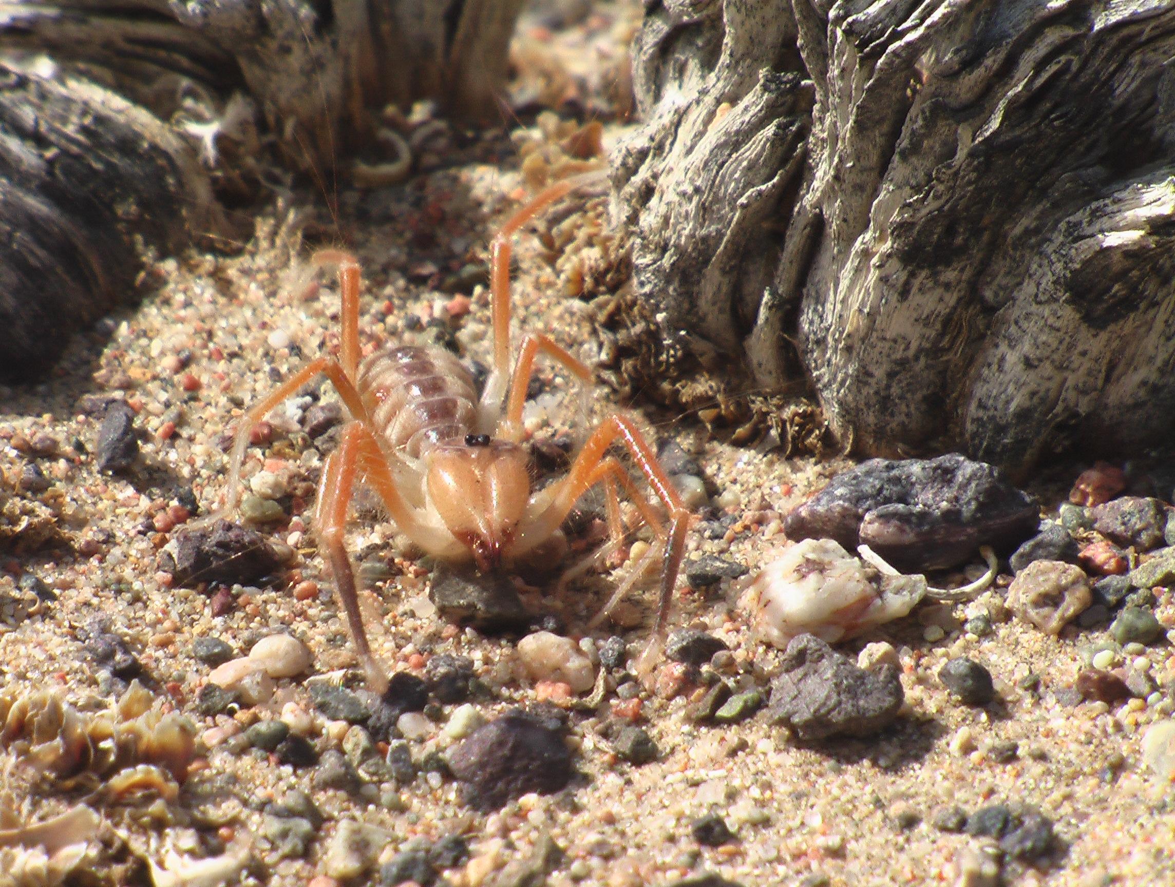 Yükle (2288x1728)Phalanx - monstrum z třídy pavoukovců - Cool  příběhyPhalanx - monstrum z třídy pavoukovců. 1cd50fcc65