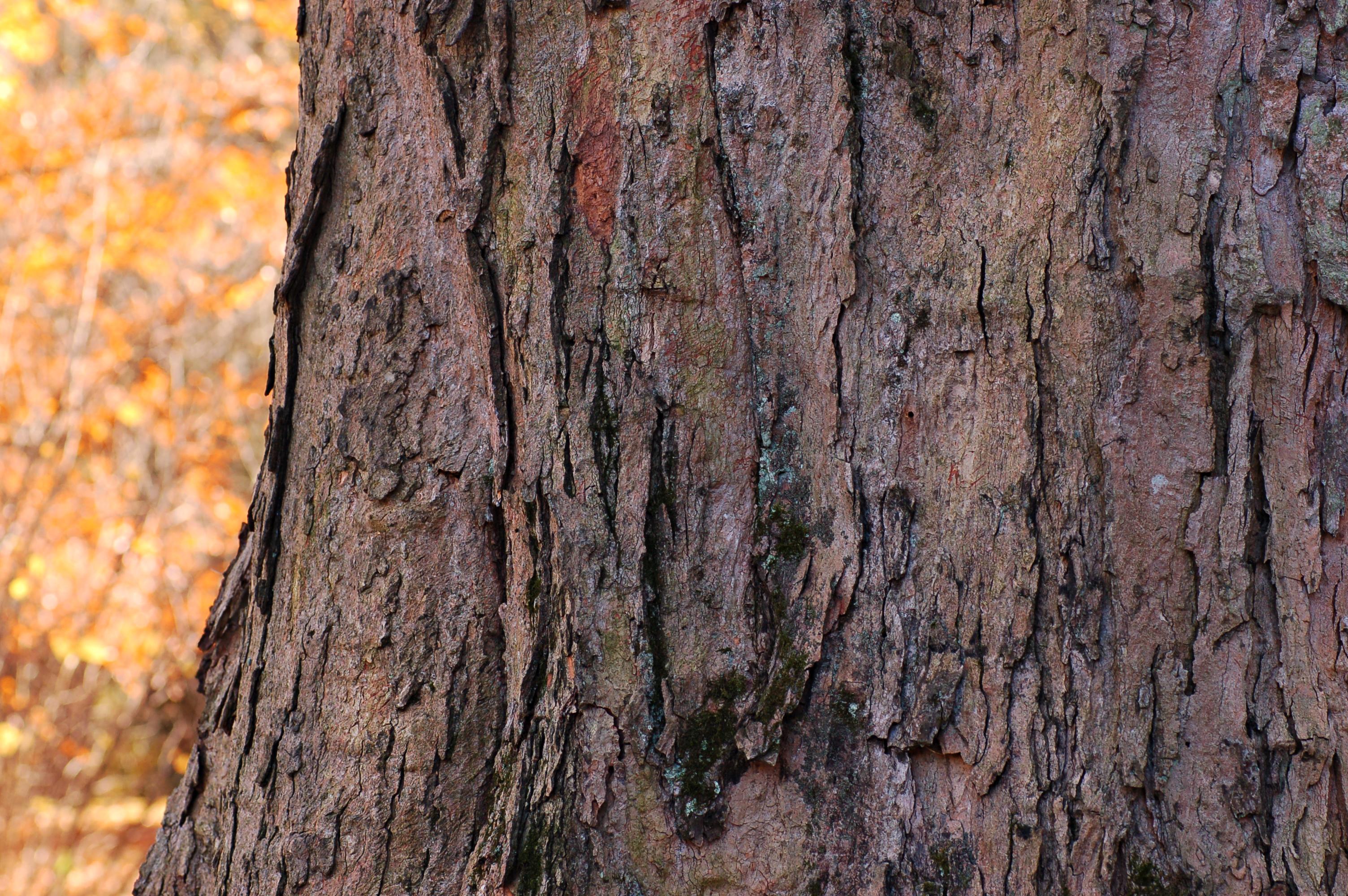 Autumn/Winter Tree Tattoo ideas on Pinterest   Winter ...