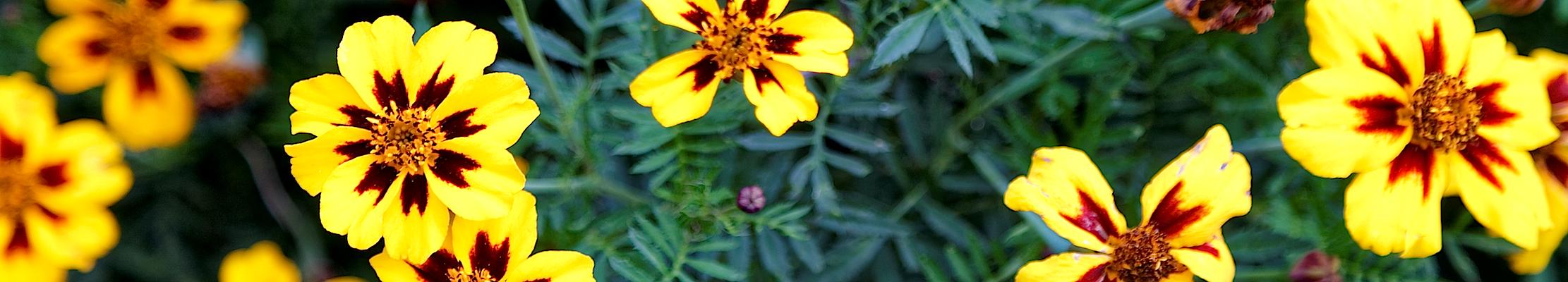 Цветы для Божией Матери, ради иконы Ея Адриановской.