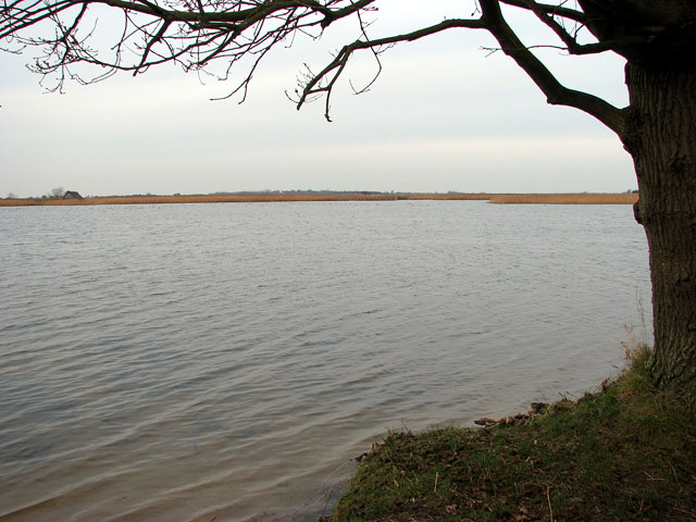 View across Martham Broad - geograph.org.uk - 1107364