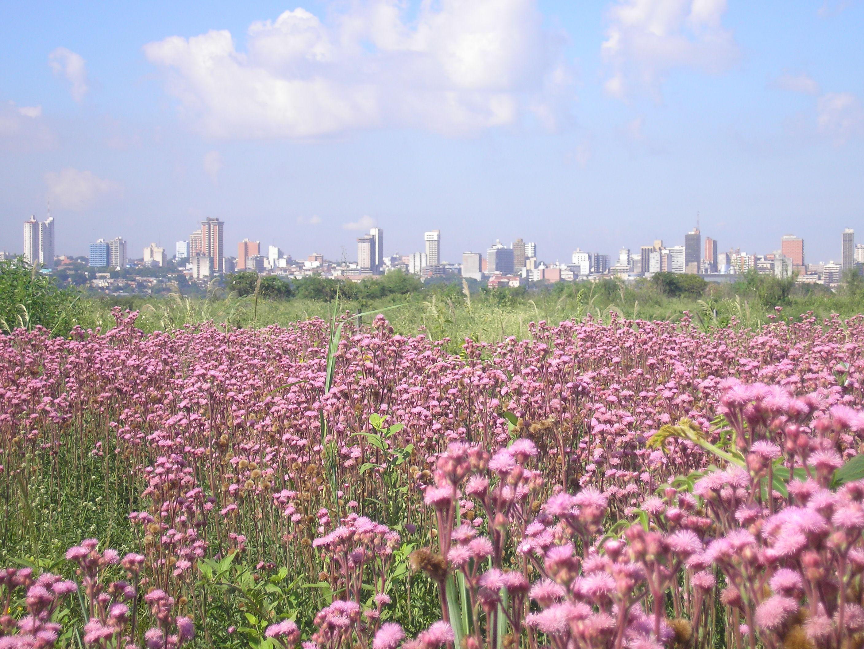 Description asuncion paraguay primavera