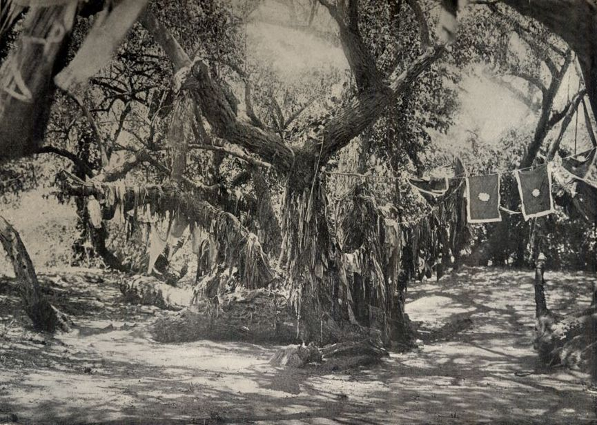 FileA Holy Tree Of Great Age 1918