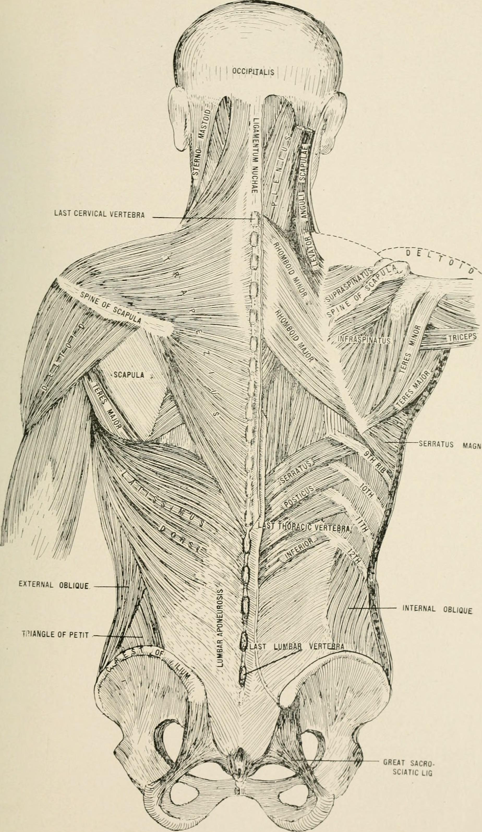Wunderbar Neue Graue Anatomie Ideen - Anatomie Ideen - finotti.info