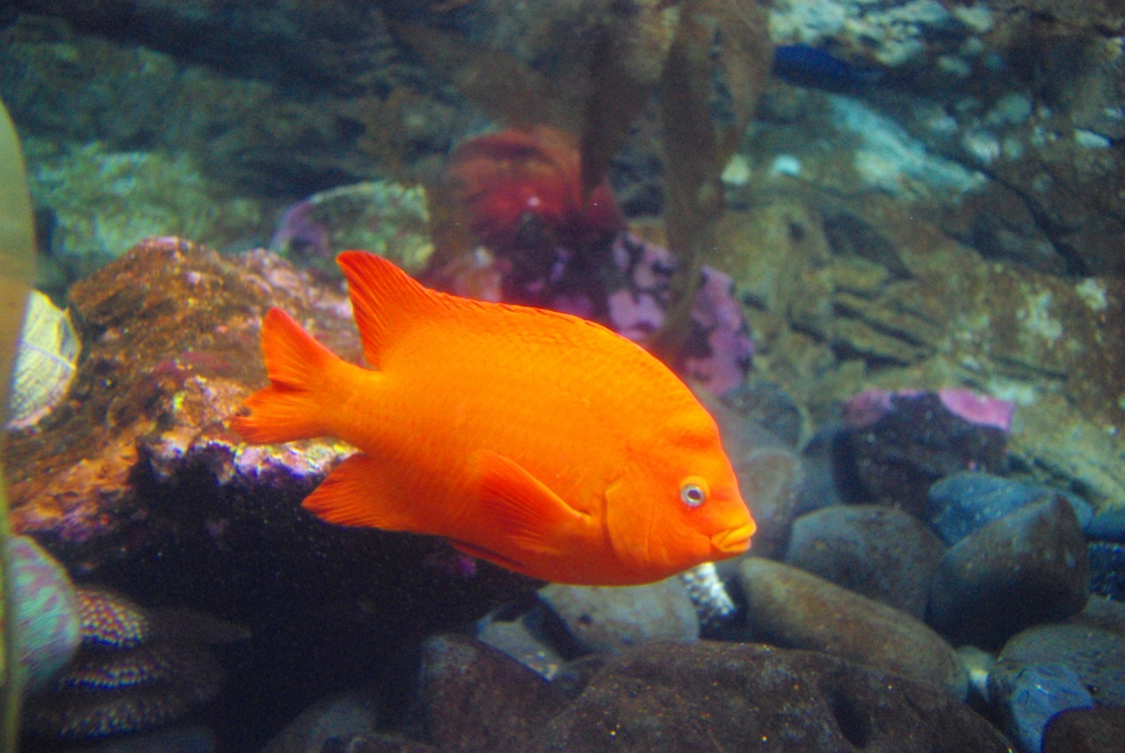 Bright Aquarium Fish  Letters
