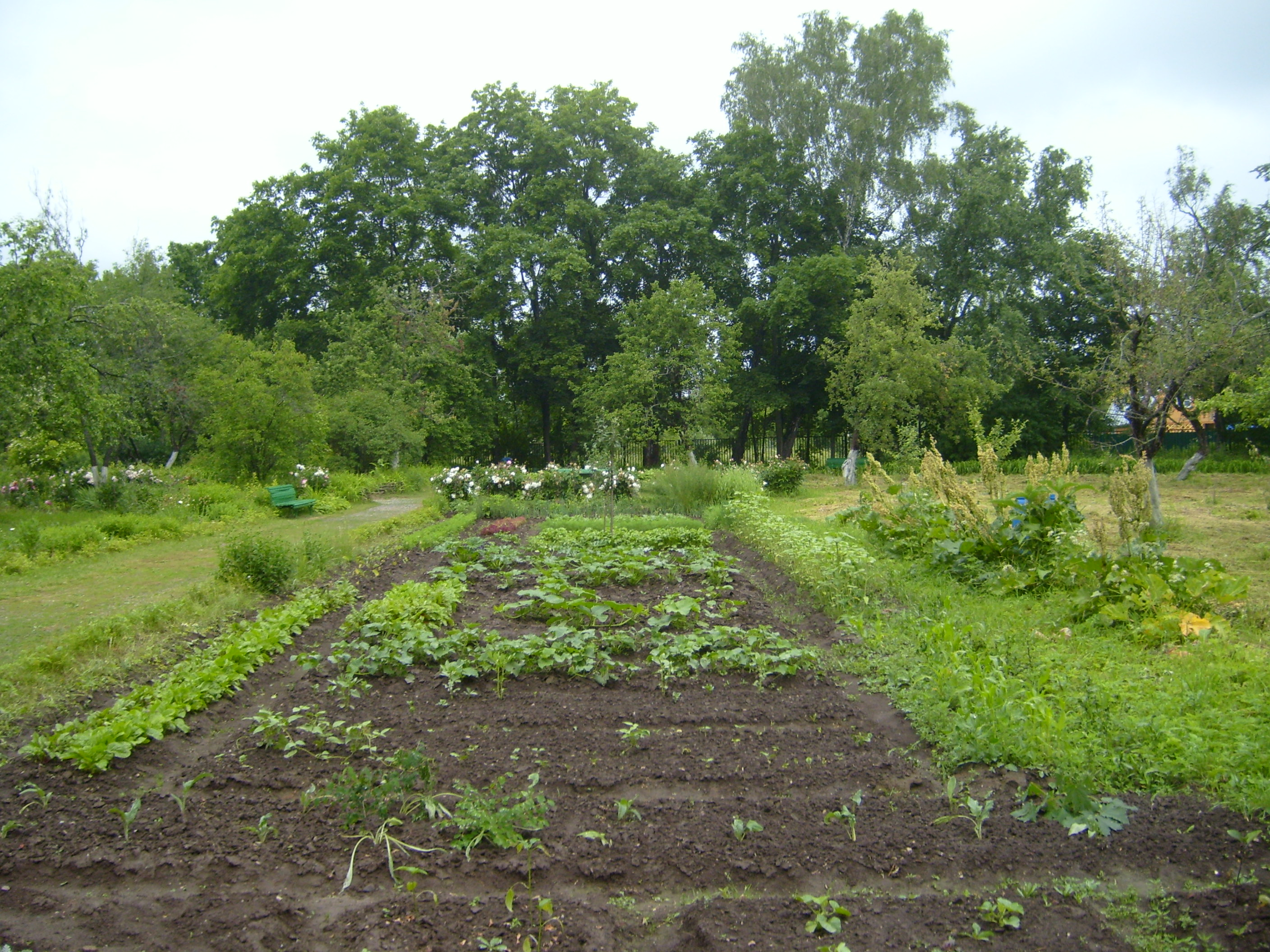 Country vegetable gardens - Chekhov Was Very Proud Of His Vegetable And Flower Garden
