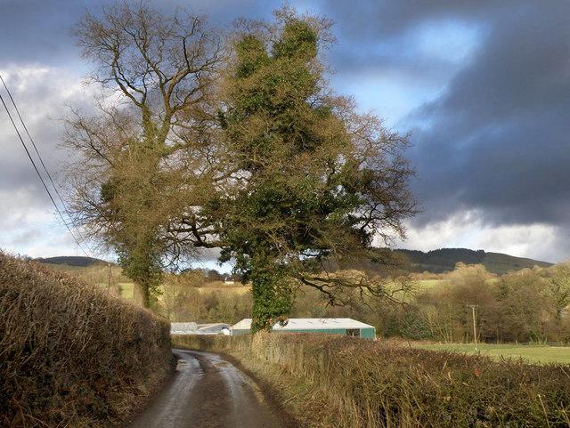 Country Lane near Cynghordy Viaduct - geograph.org.uk - 1134840