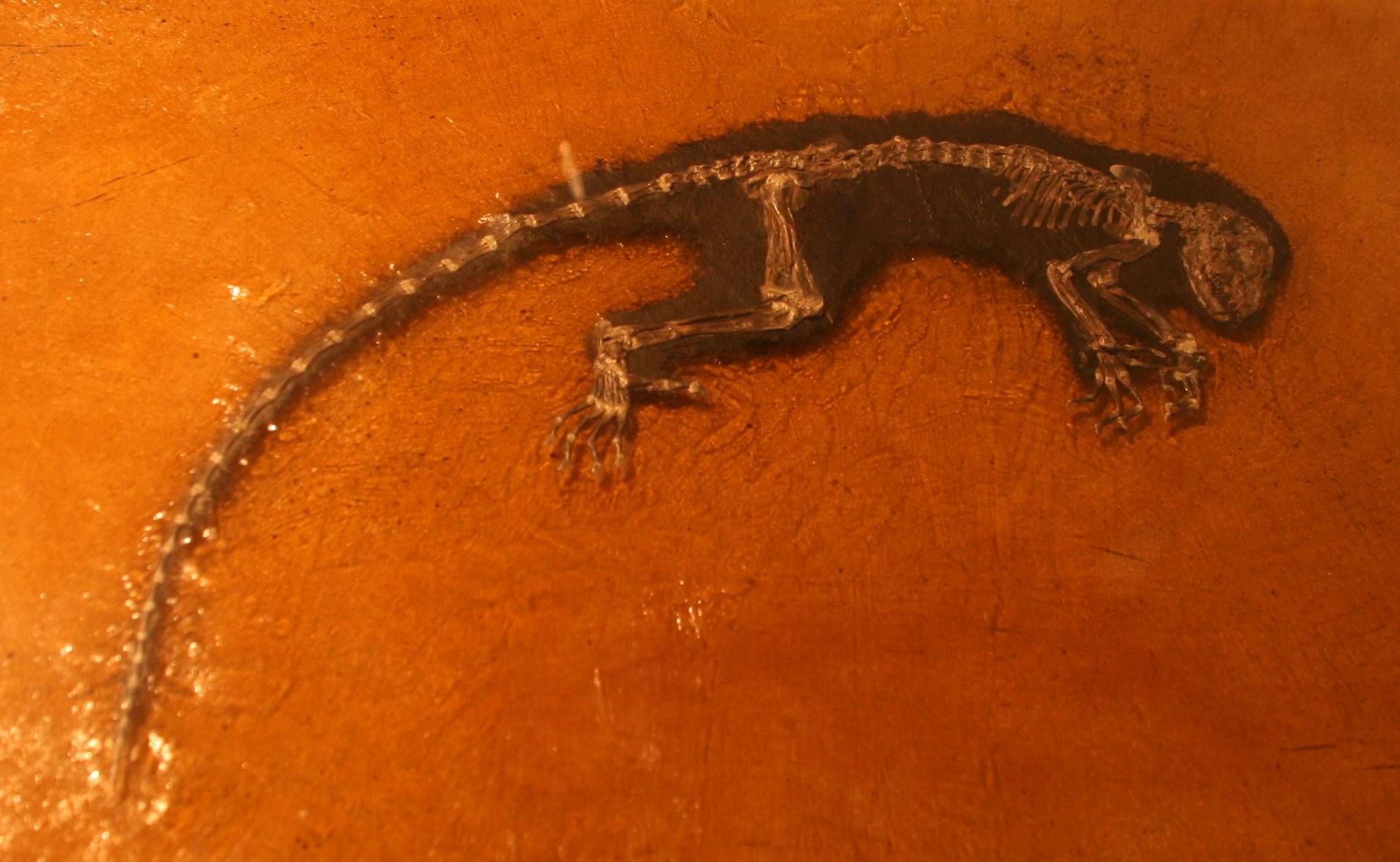 File darwinius masillae replica messel pit jpg for A grande muralha da china