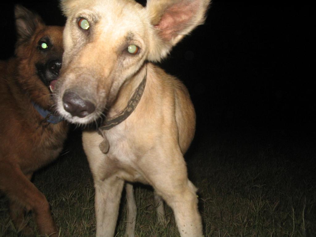 Dog Body Langage Eyes