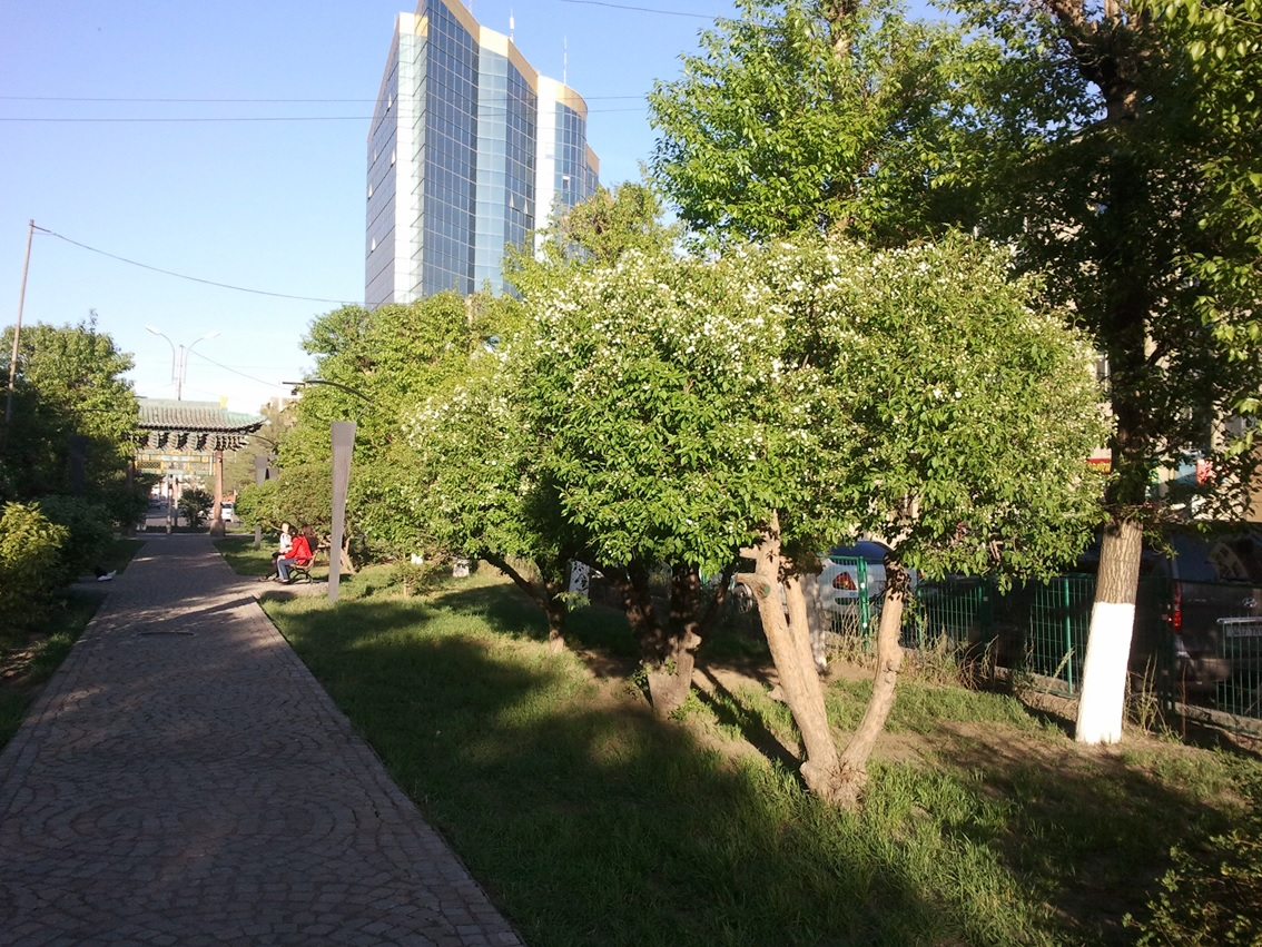 FoliageUB7.jpg