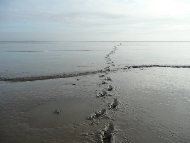 Footprints in the mud - geograph.org.uk - 1140102