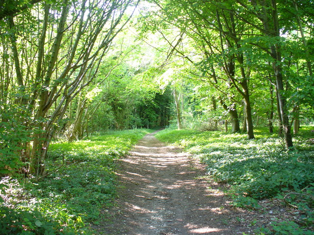 Houghton Forest - geograph.org.uk - 1318822