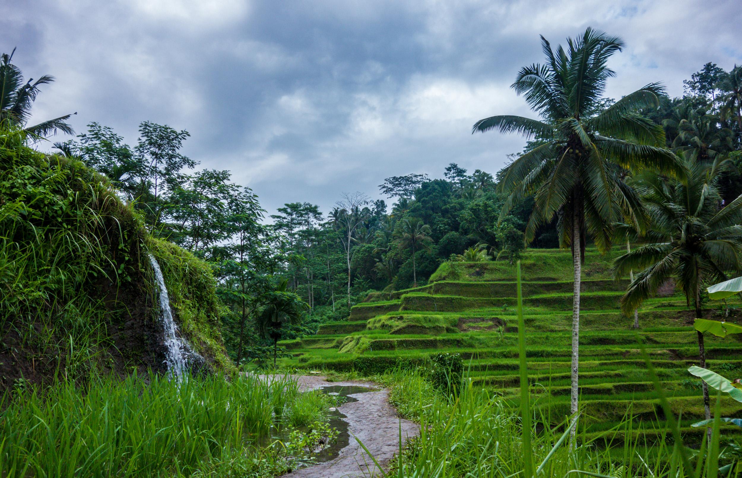 """Résultat de recherche d'images pour """"Ubud, Indonesia"""""""