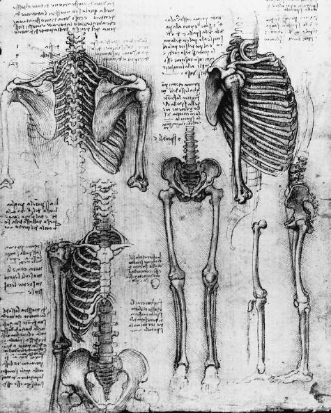 Anatomy Skeleton Drawing File:leonardo Skeleton 1511