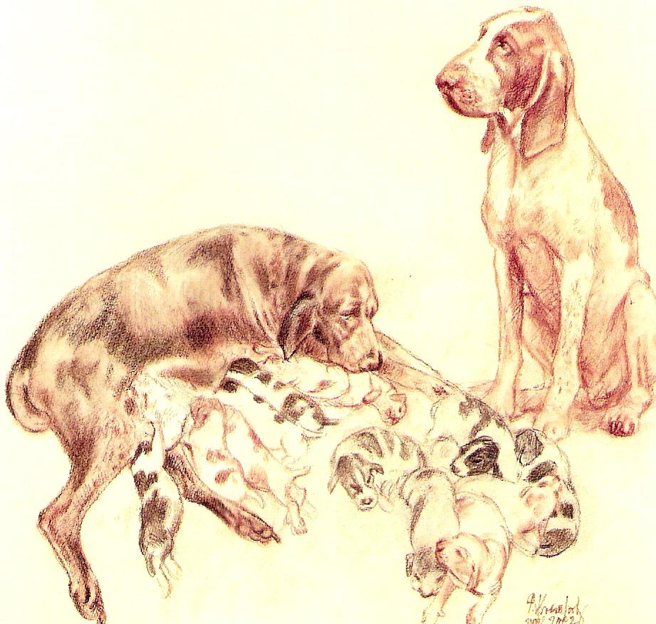 Description litter of dogs