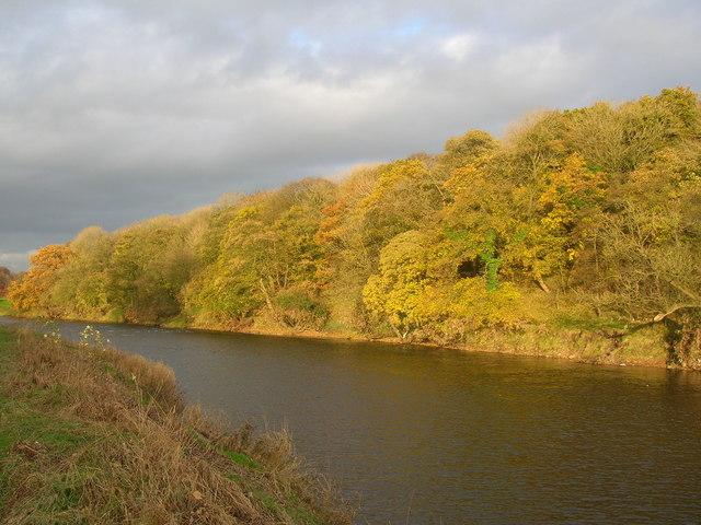 Mitton Wood and the River Ribble - geograph.org.uk - 1081064