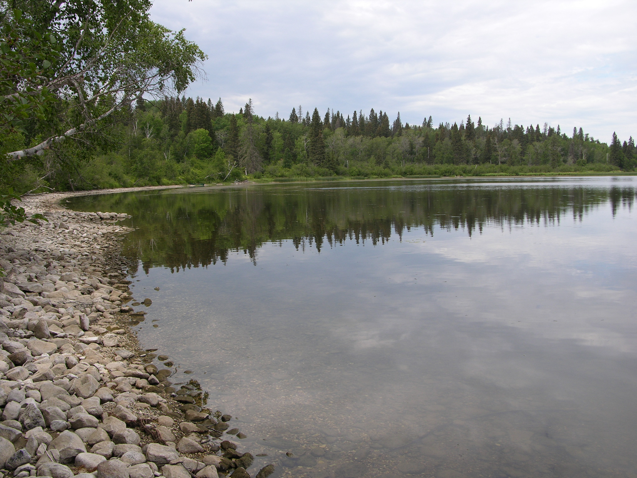 Shoreline of a Lake With