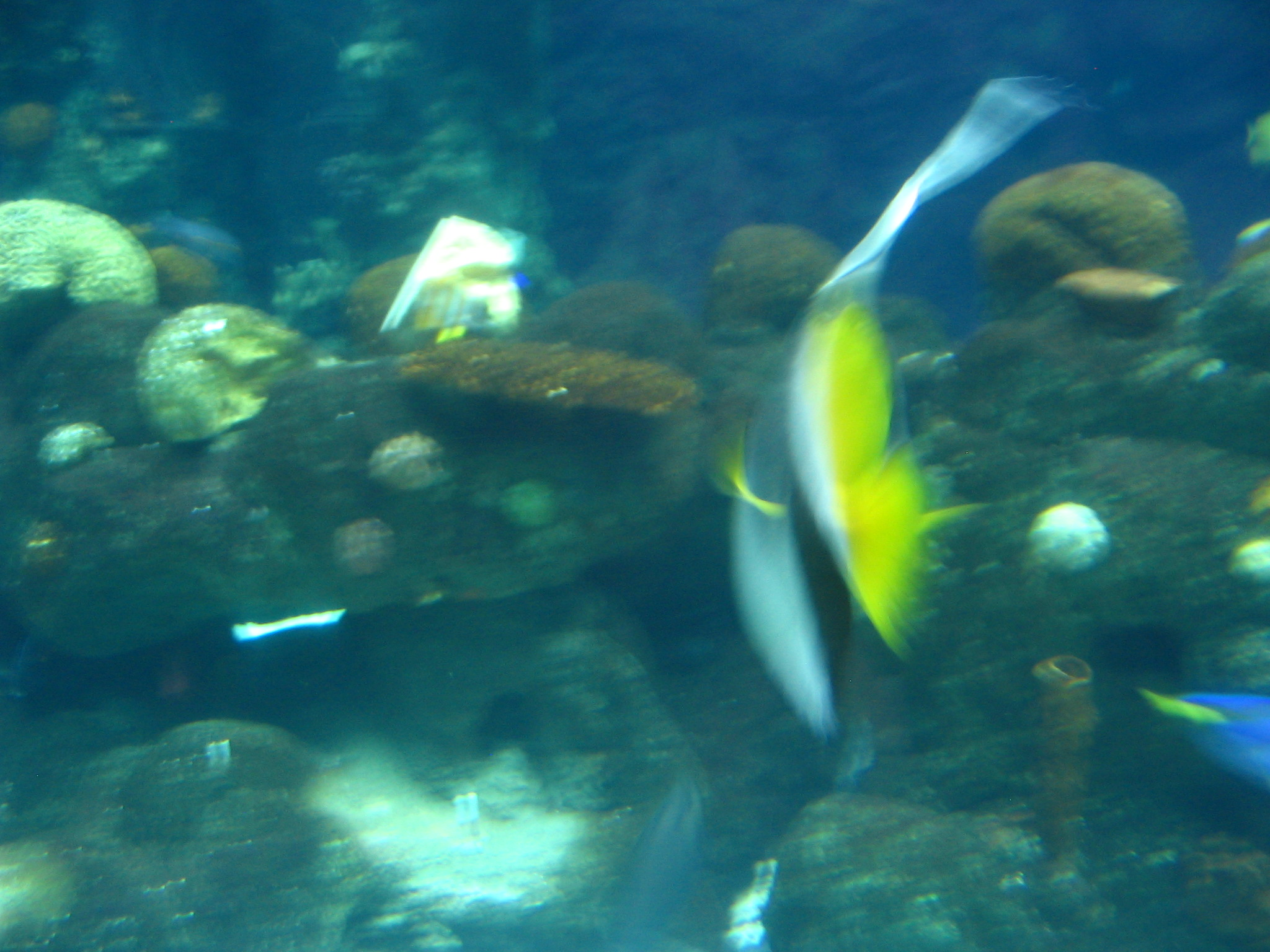 Gill from finding nemo search results dunia photo for What kind of fish is nemo