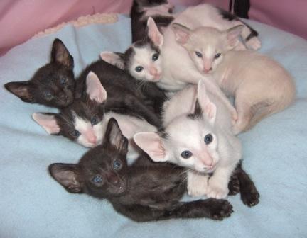 kittens. With inspiring colors kitten