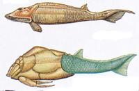Ostracoderm and placoderm.jpg