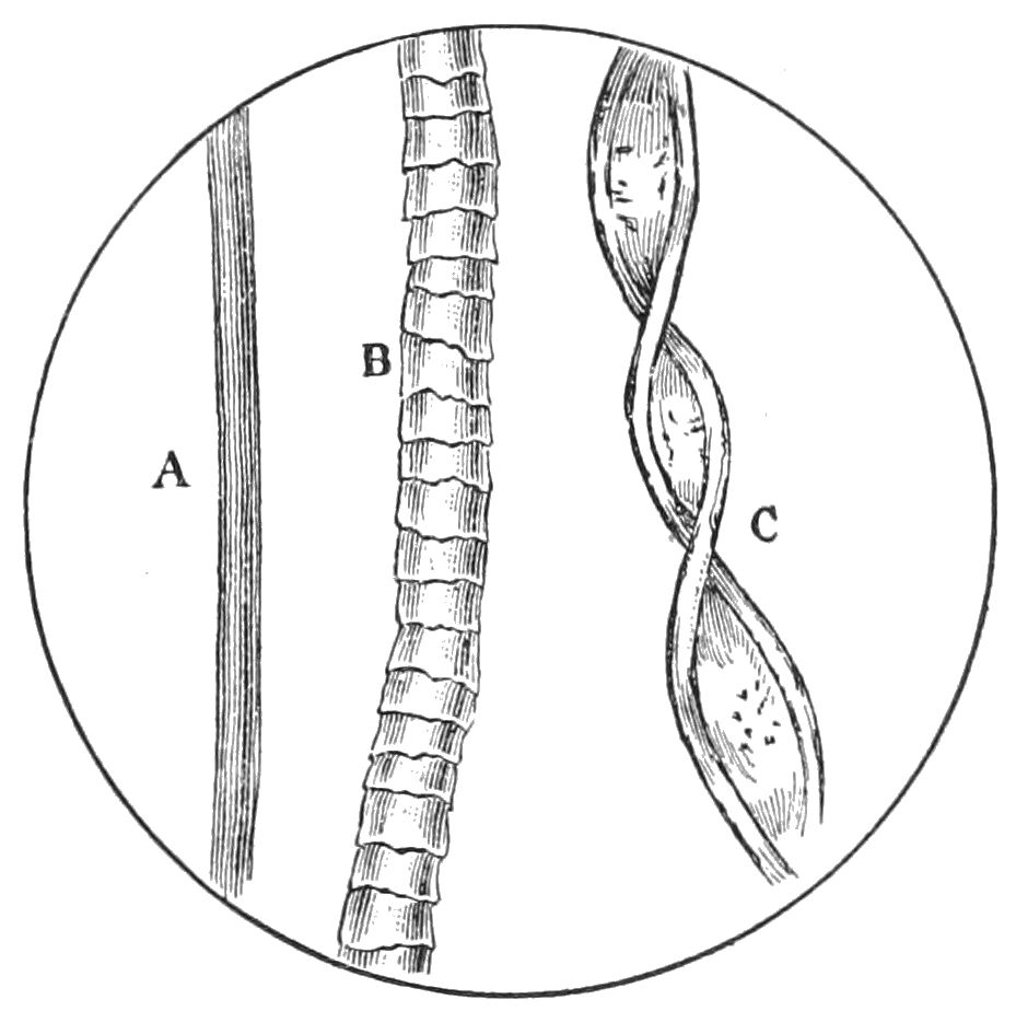 Depiction of Fibra natural