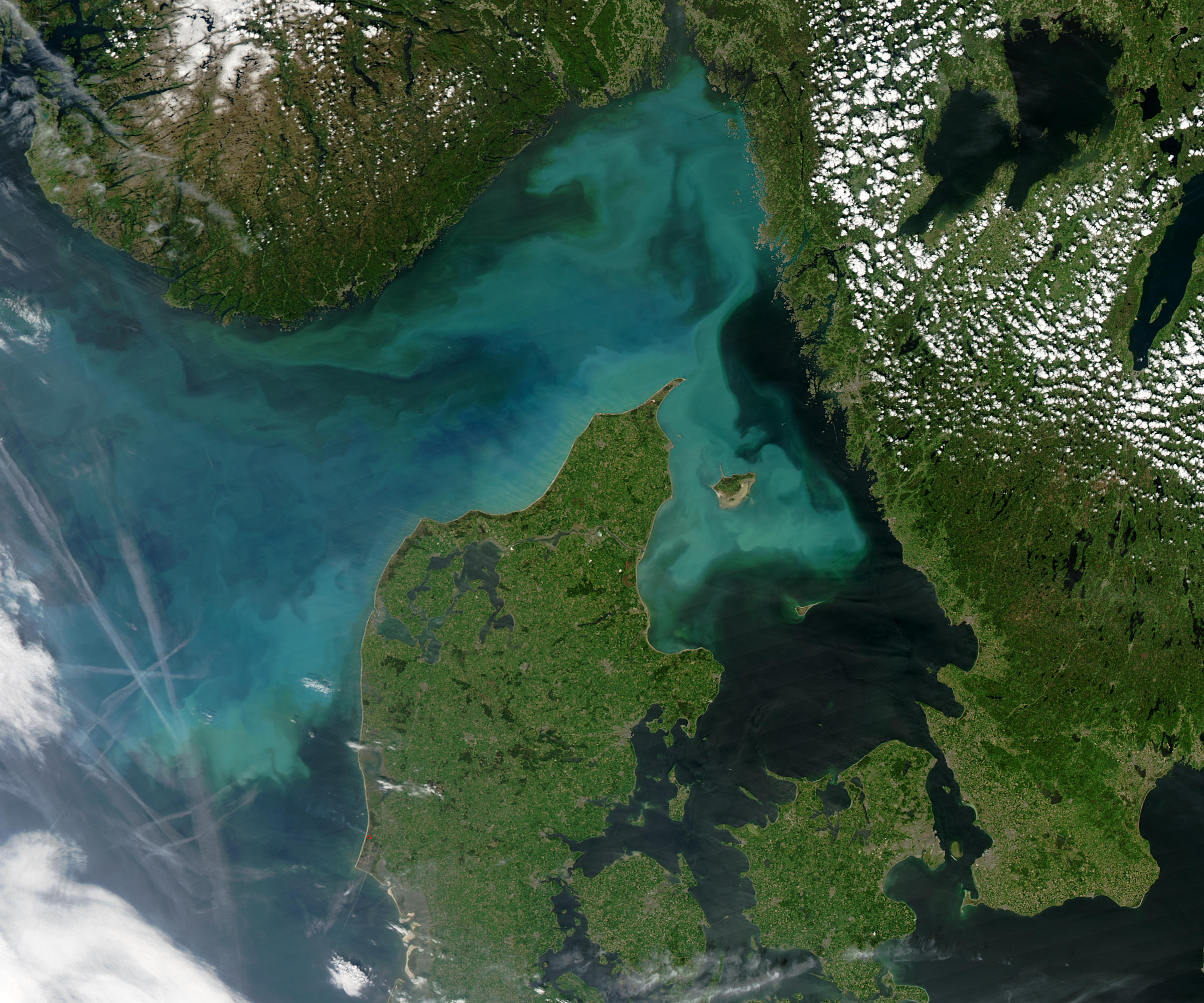 File Phytoplankton Jpg Wikimedia Commons