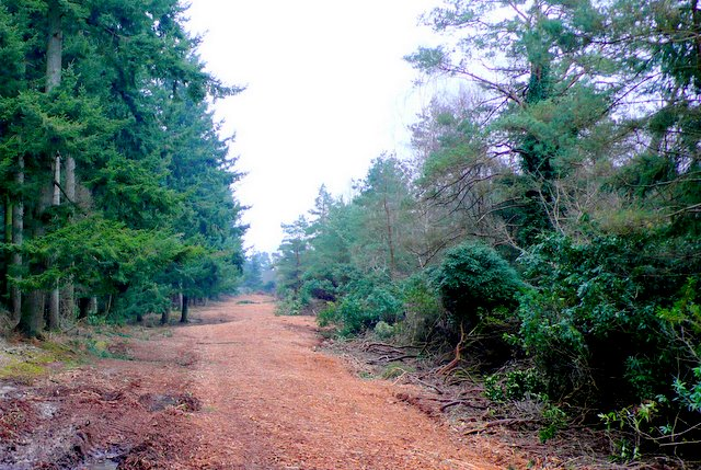 Rhododendron Clearance, Puddletown Forest - geograph.org.uk - 1117016
