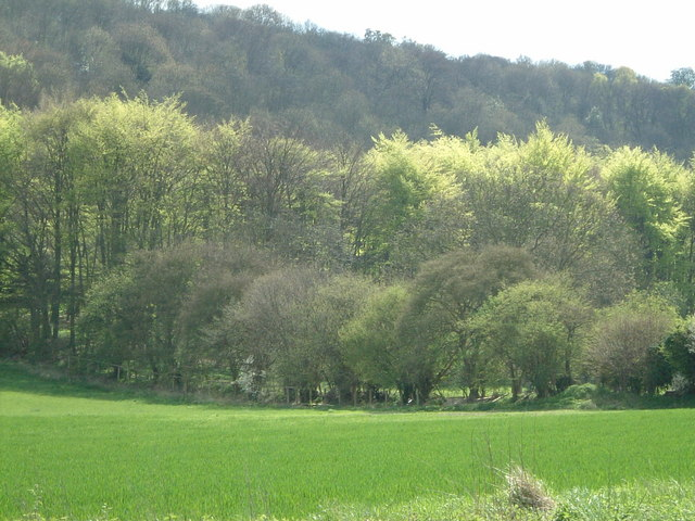 Three layers of trees - geograph.org.uk - 163437