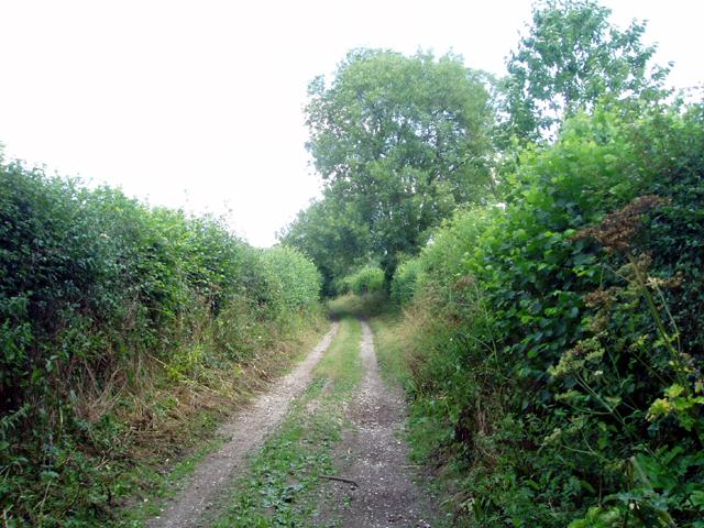 File:Track near Little Woodcote - geograph.org.uk - 211365.jpg
