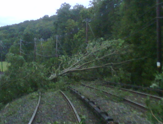 File:Tree on Hudson line at Garrison (6090749482).jpg