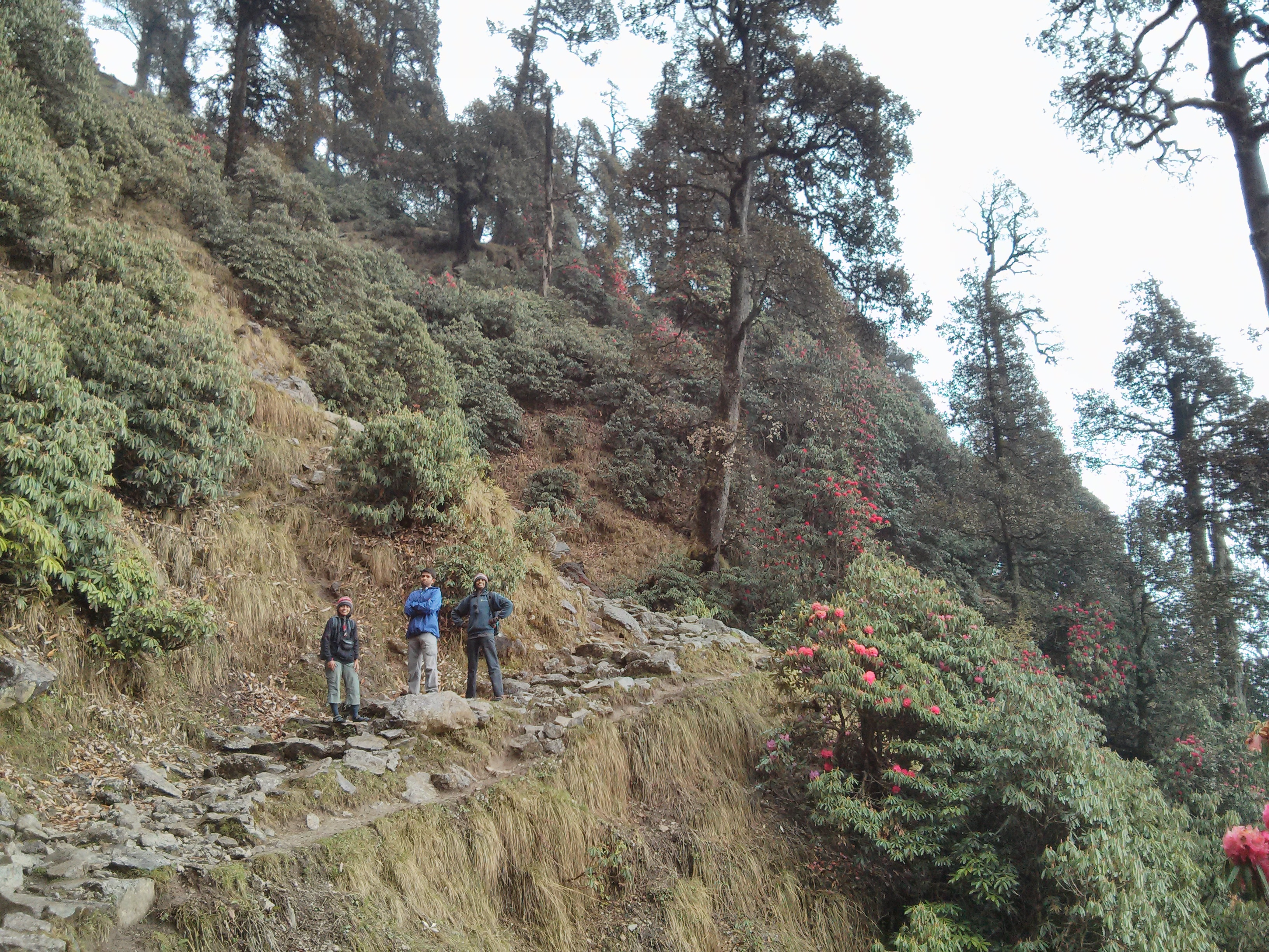 Triund Hill Trekking route