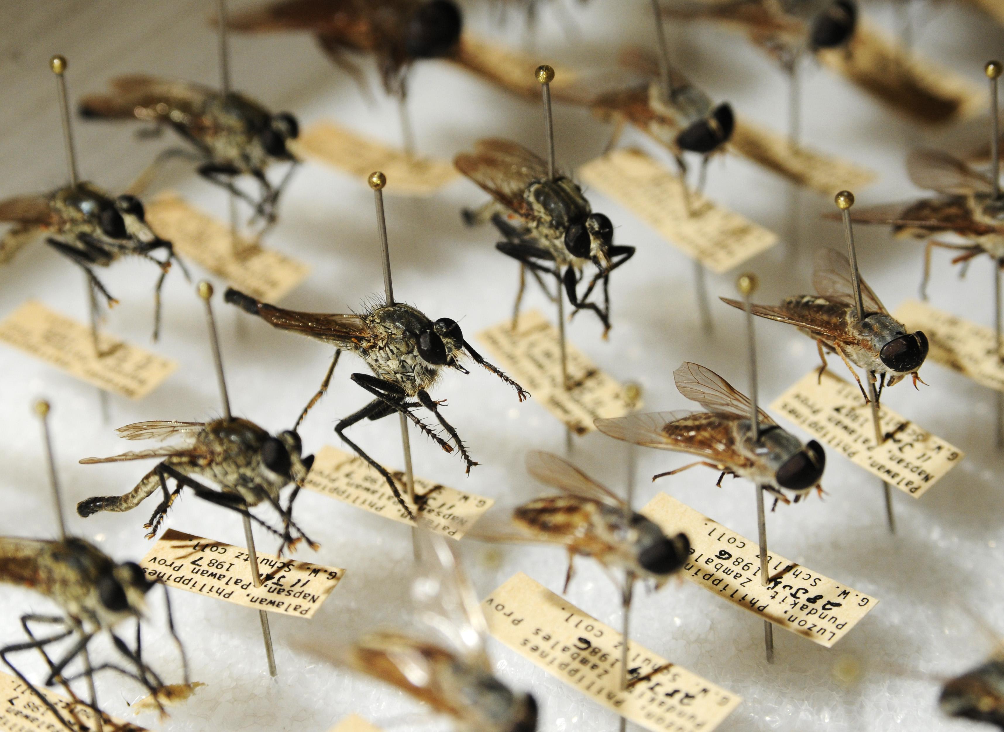 Forensics entomology and bugs