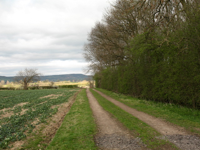 Underwood Plantation - geograph.org.uk - 396371