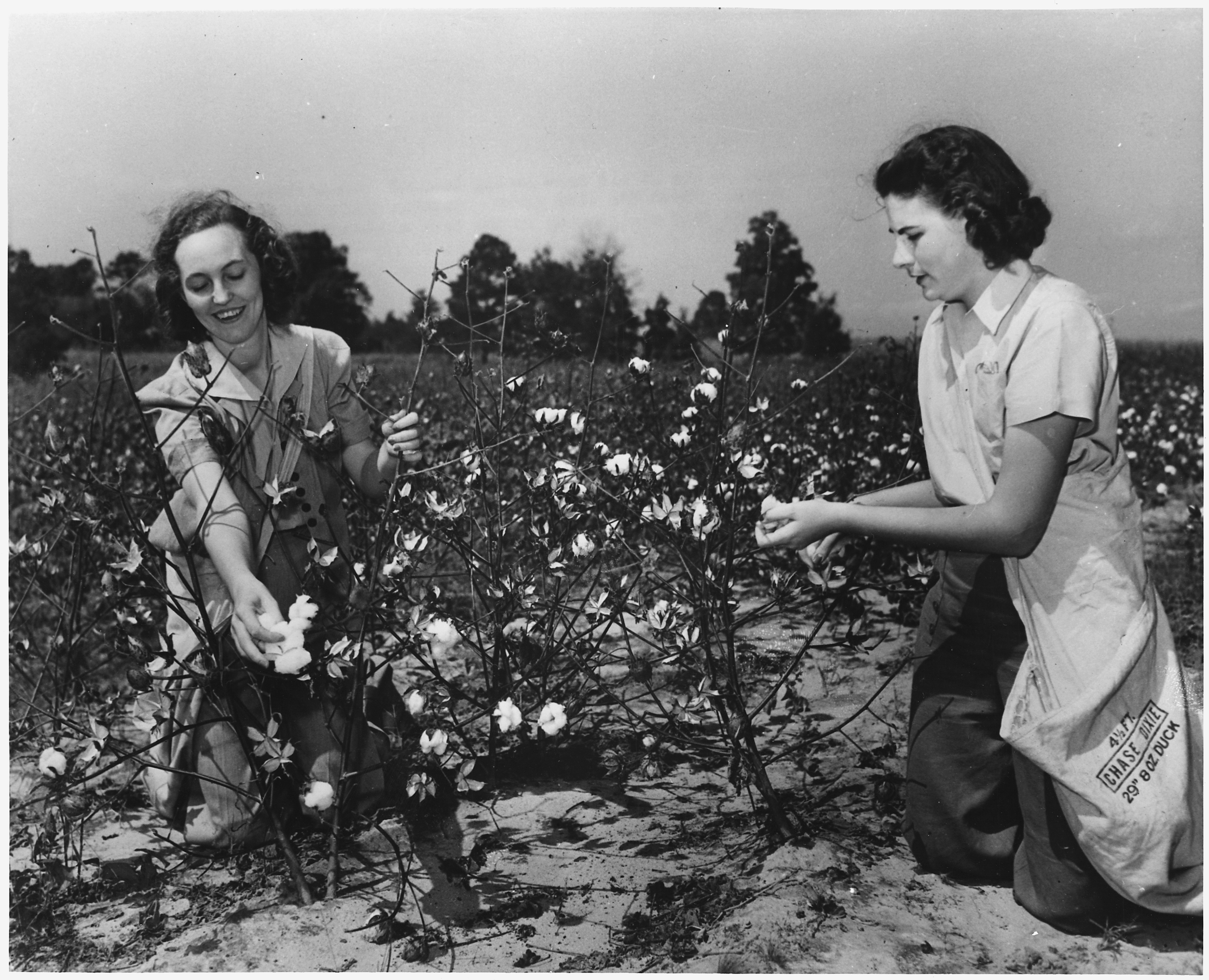 File:Women pick cotton for the U.S. Crop Corps - NARA ...