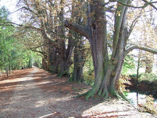Woodland walk in Hinchingbrooke Country Park - geograph.org.uk - 1534121